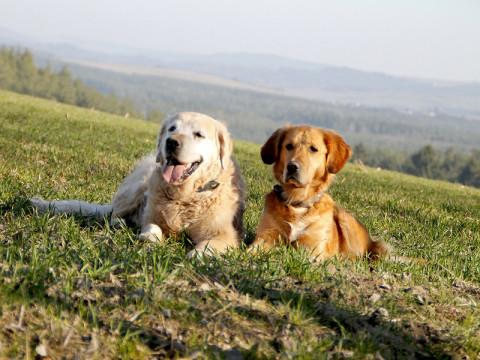 Thüringer Hundeschule