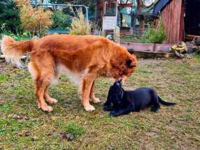 Hundeschule Ilmkreis