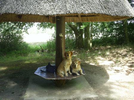 mobile Thüringer Hundeschule