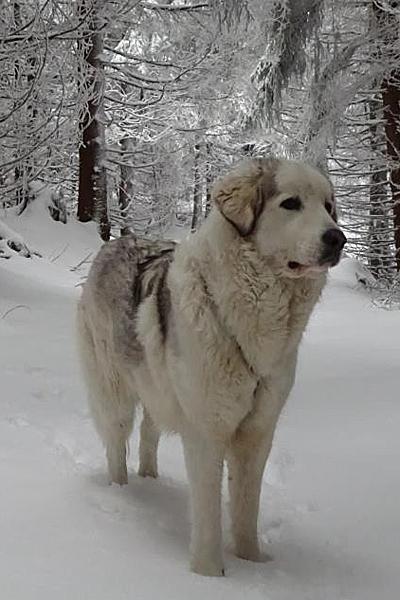 Referenzen - Thüringer Hundeschule